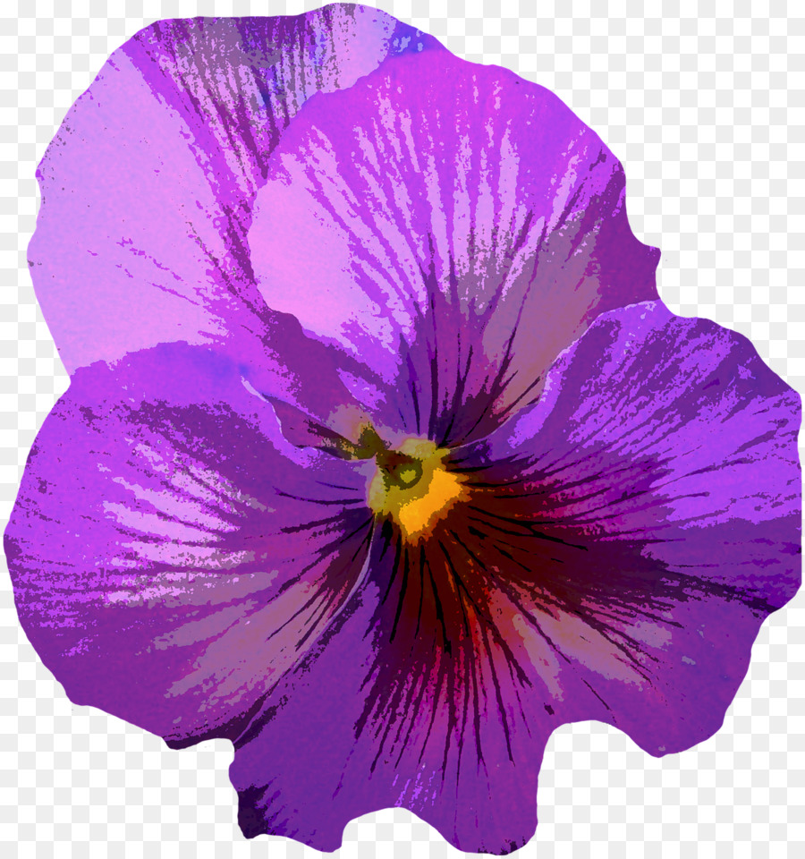 vector library library Violet clipart flower plant. Pansy purple transparent