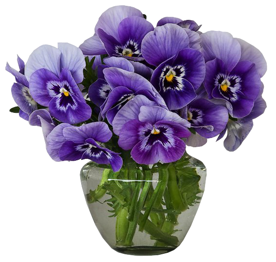 png transparent Pencil and in color. Violet clipart vase