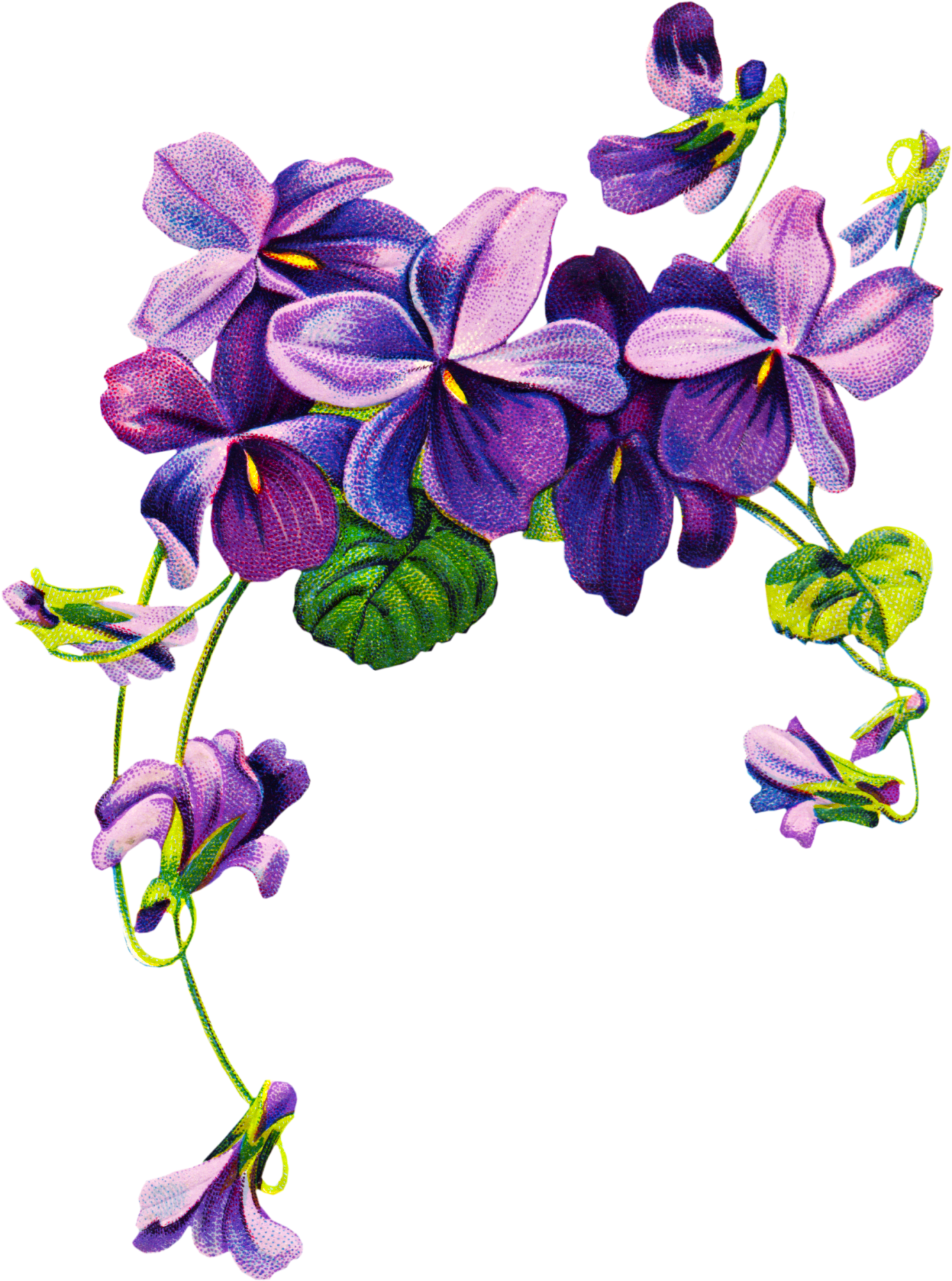 picture free download Vintage clipart . Violets drawing