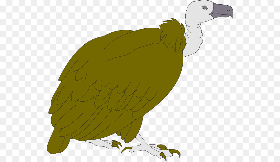 image library download Turkey cartoon bird illustration. Vulture clipart.