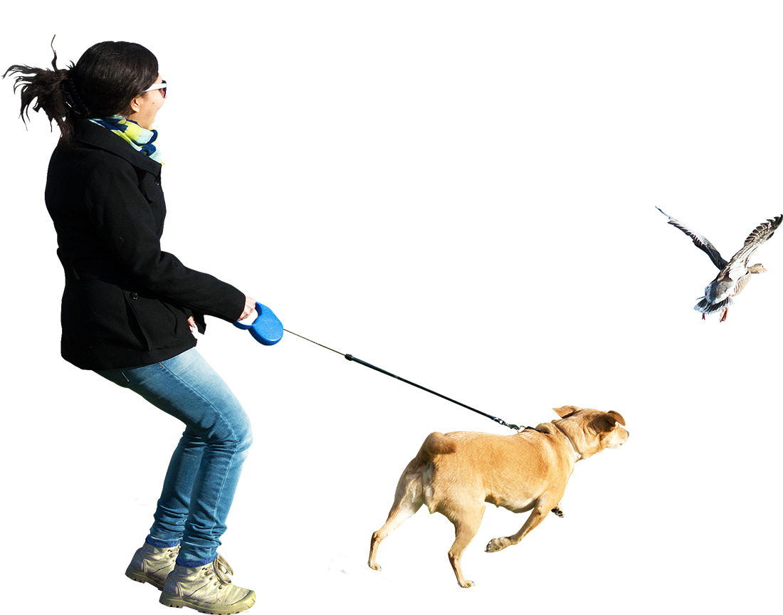 banner transparent library Dogo argentino perro de. Walking the dog clipart