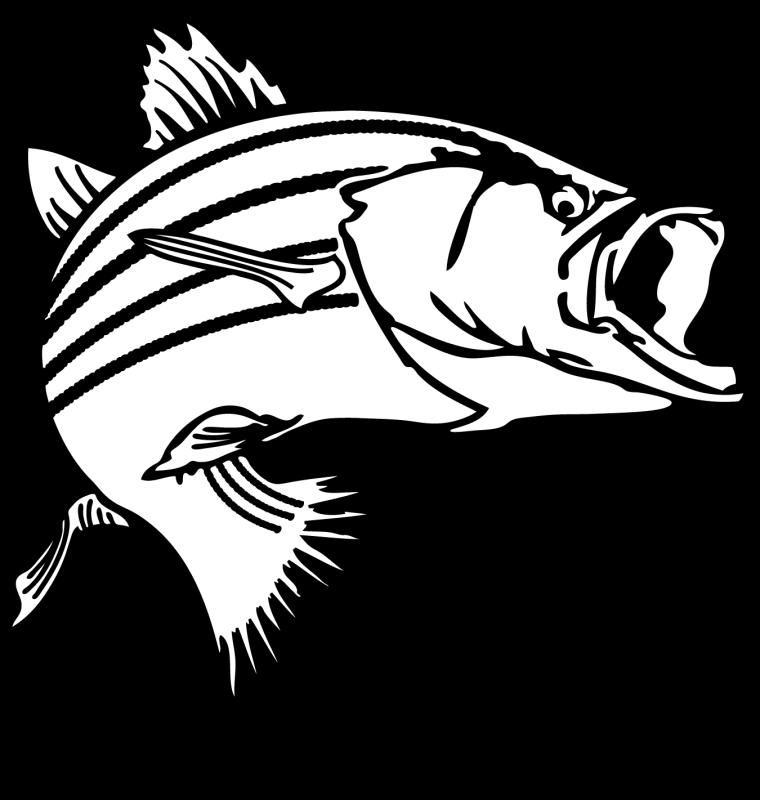 stock Walleye Drawing at GetDrawings
