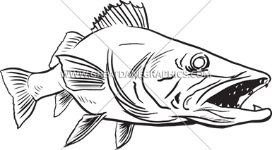 graphic royalty free stock Walleye