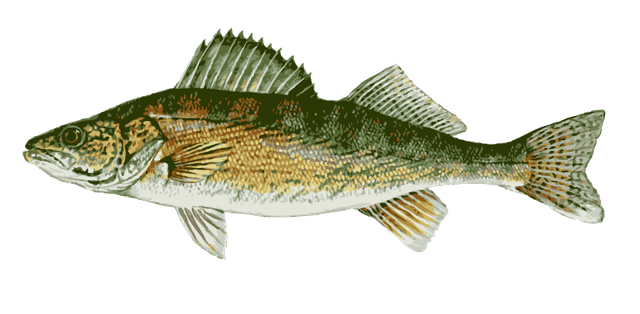 clip art black and white Great Clip Art of Freshwater Fish