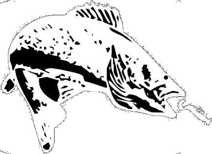 graphic free Walleye Drawing at GetDrawings