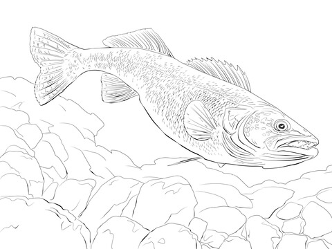 picture free download Walleye Fish coloring page