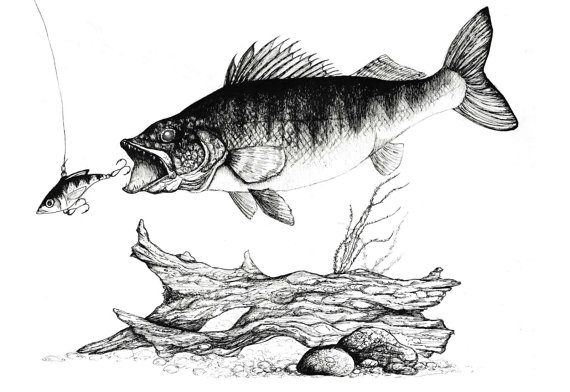 clipart free stock Walleye Ink Print Ink Fish Drawing