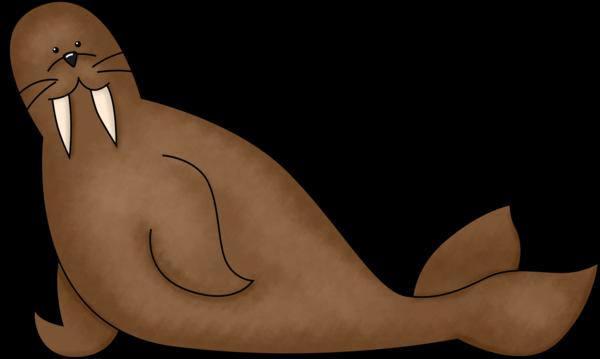 image Walrus