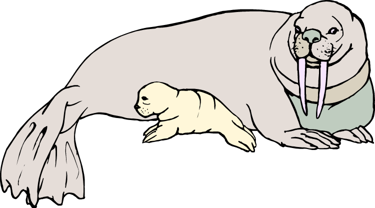 graphic library download Walrus clipart baby. Free