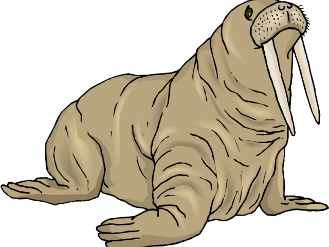image Walrus clipart grey thing. Pictures of exercise equipment