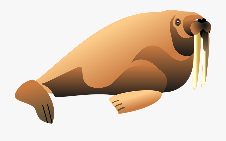 picture Cliparts cartoons jing fm. Walrus clipart tusk