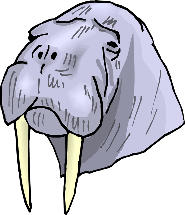 jpg library stock Free face . Walrus clipart tusk