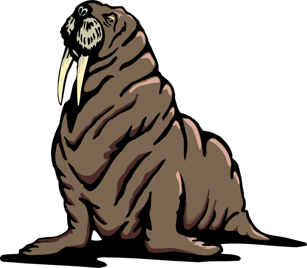 picture library library Wrinkled clip art at. Walrus clipart tusk