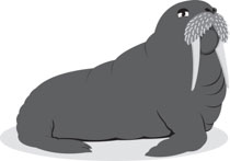 svg library library Search results for clip. Walrus clipart tusk