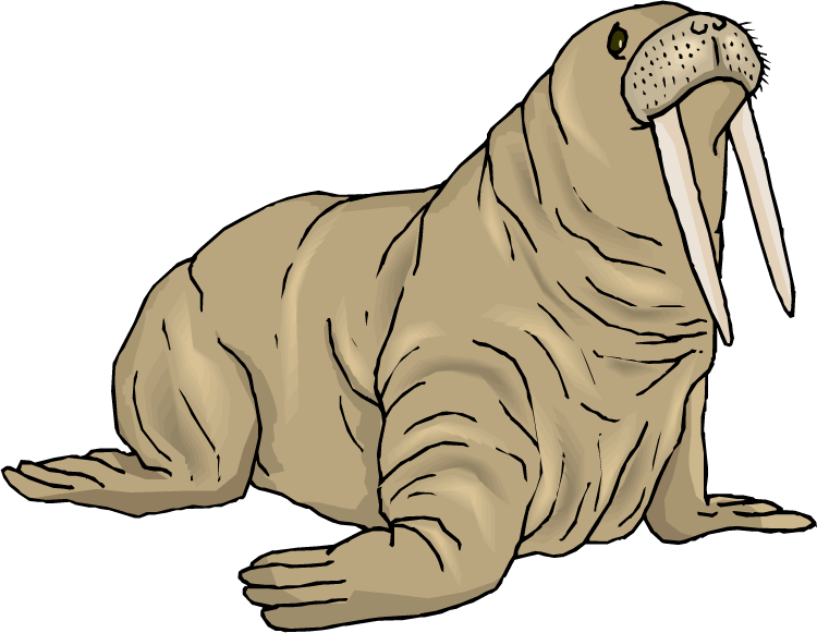 jpg library download Walrus clipart. Top clip art free
