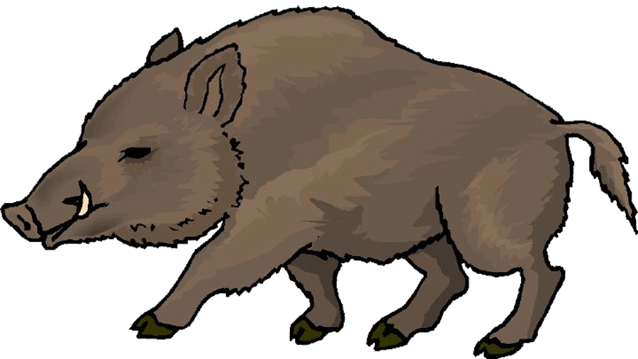 png freeuse Wild clip art others. Boar vector angry