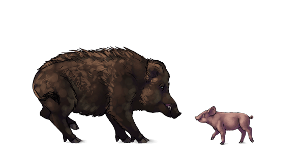 image stock How to draw animals. Hog drawing warthog