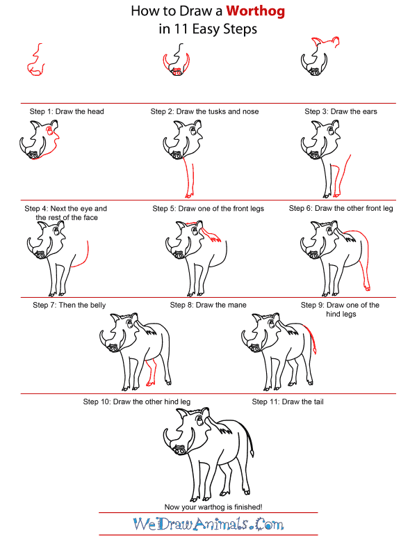 clip art library library How to Draw a Warthog