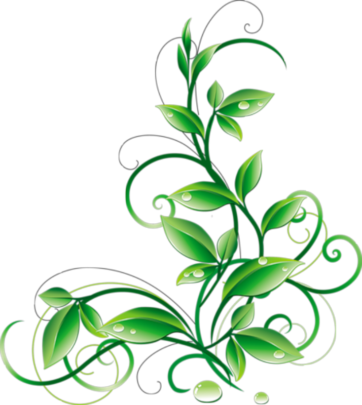 clip art royalty free stock Floral Green Leaves And Water Droplets PNG Clipart
