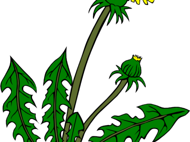 vector free download Free on dumielauxepices net. Weed clipart