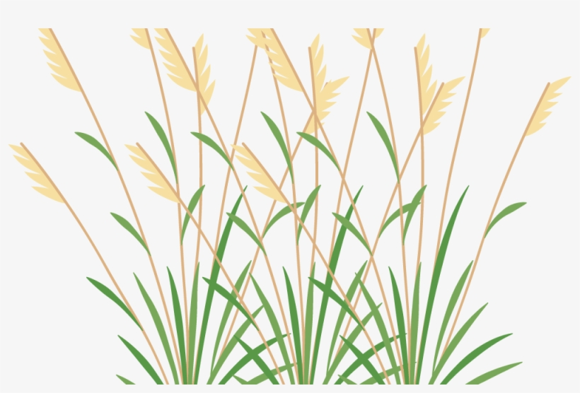 banner transparent library Icon grasses and free. Weeds clipart