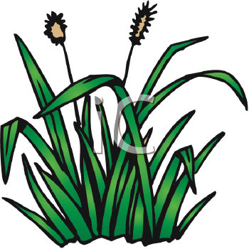 vector stock Weeds clipart. Free pulling cliparts download