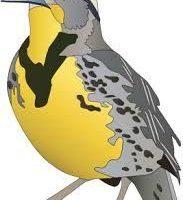 jpg royalty free stock Portal . Western meadowlark clipart