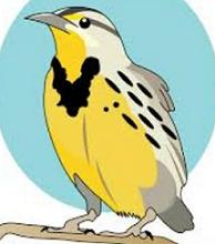 clip download Free . Western meadowlark clipart