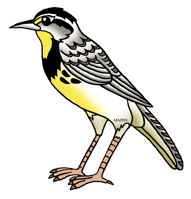 clipart free library Western meadowlark clipart. United states clip art
