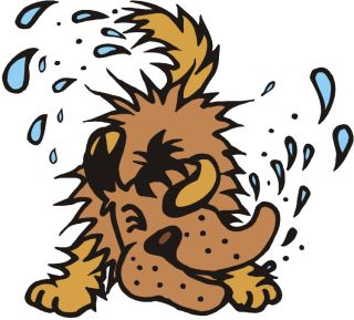 picture royalty free download Pet portal . Wet clipart wet puppy