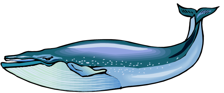 banner black and white library Whale clipart. Blue .
