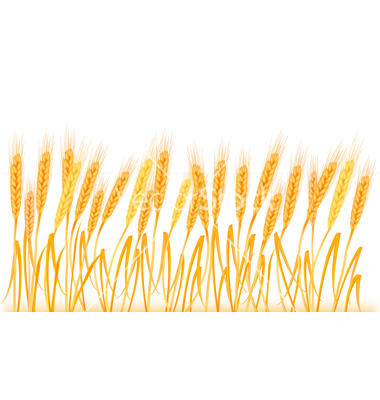 banner download Free cliparts download clip. Wheat border clipart
