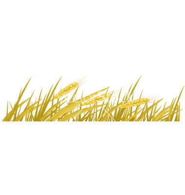 banner download Wheat border clipart. Free cliparts download clip