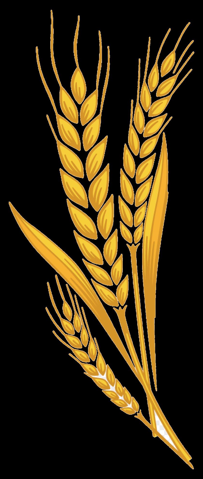 clip art transparent download Prairie bran harvest free. Wheat clipart