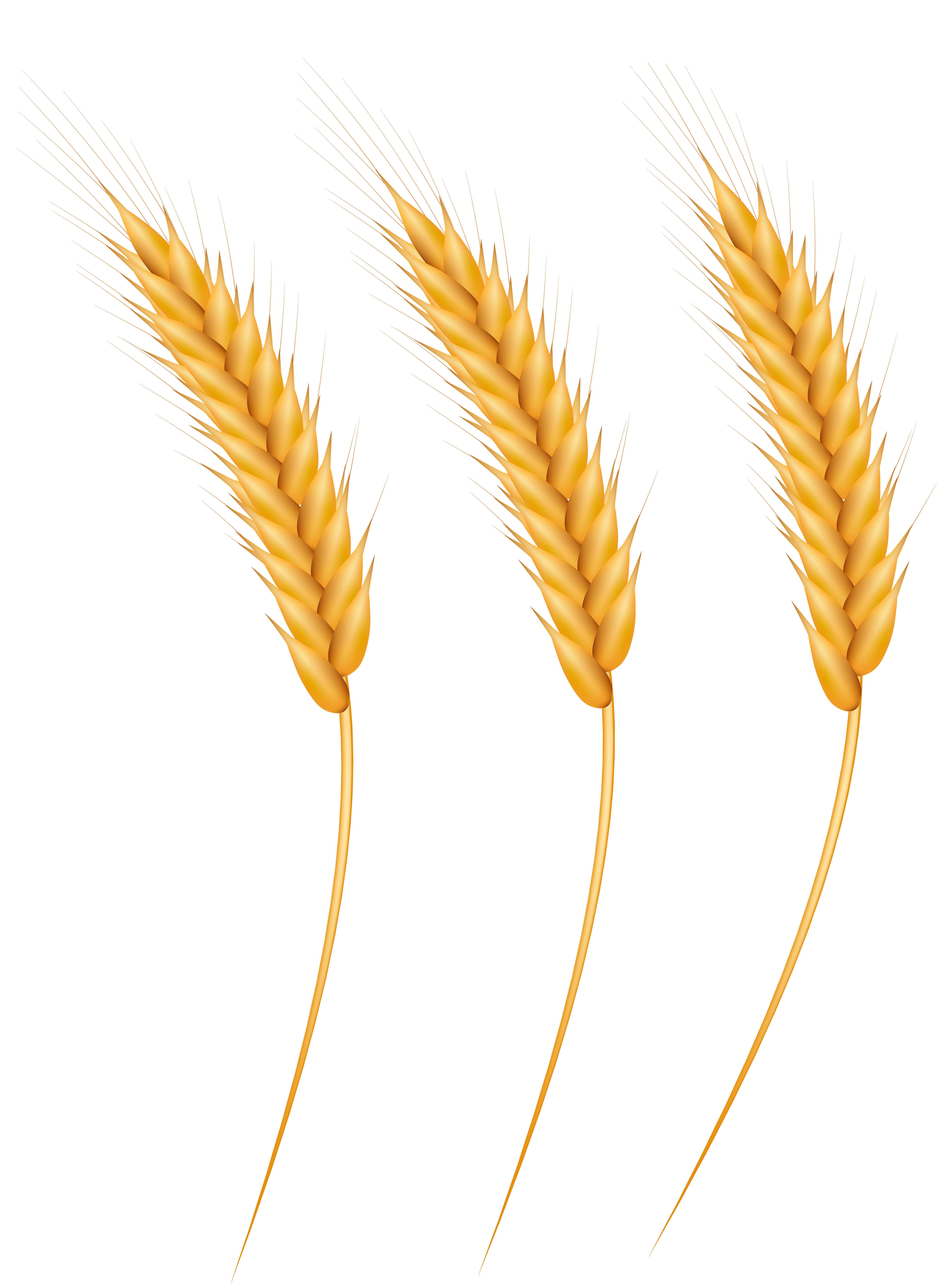 svg black and white library Wheat clipart. Grains png clip art