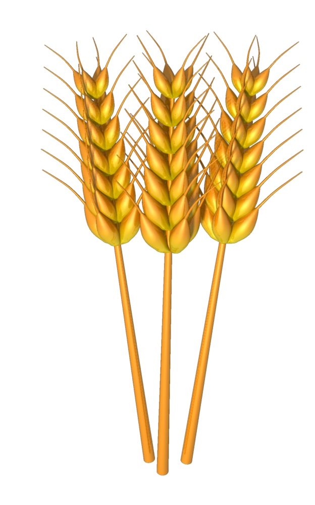 svg royalty free stock Free cliparts download clip. Wheat clipart