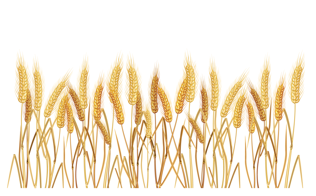clipart freeuse Free for download on. Wheat border clipart