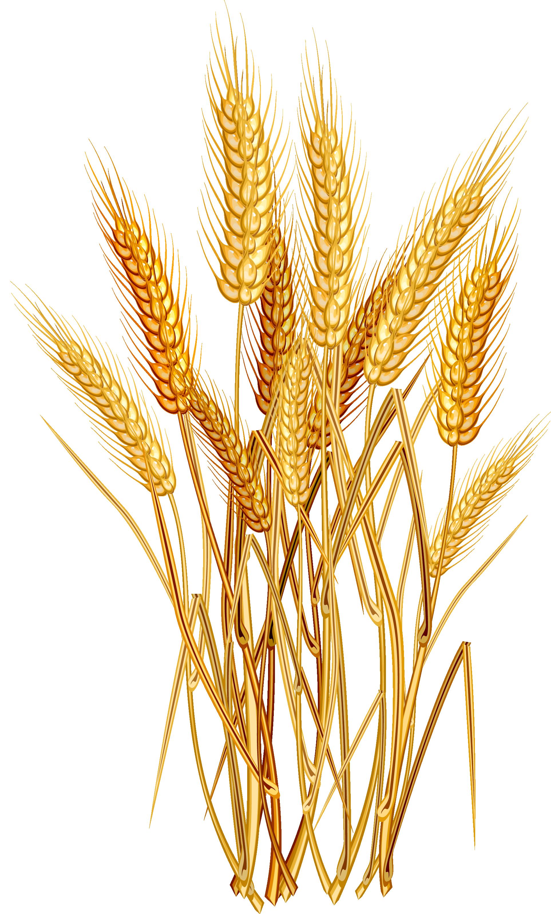 clipart download Euclidean vector clip art. Grains clipart wheat crop