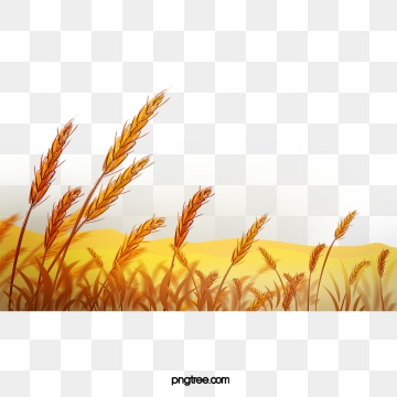 download Png vector psd and. Wheat field clipart