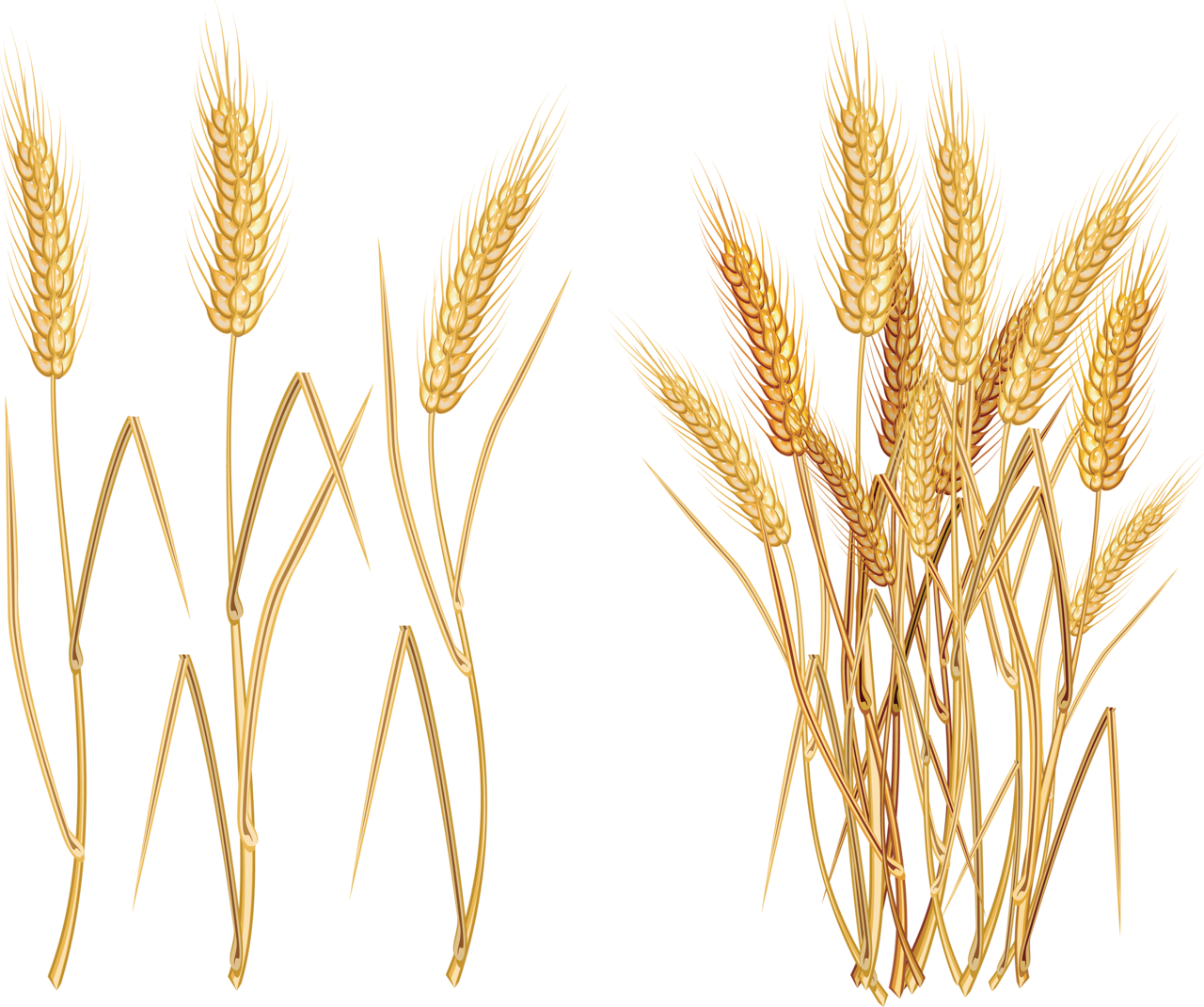 svg black and white library D ff e png. Wheat bundle clipart