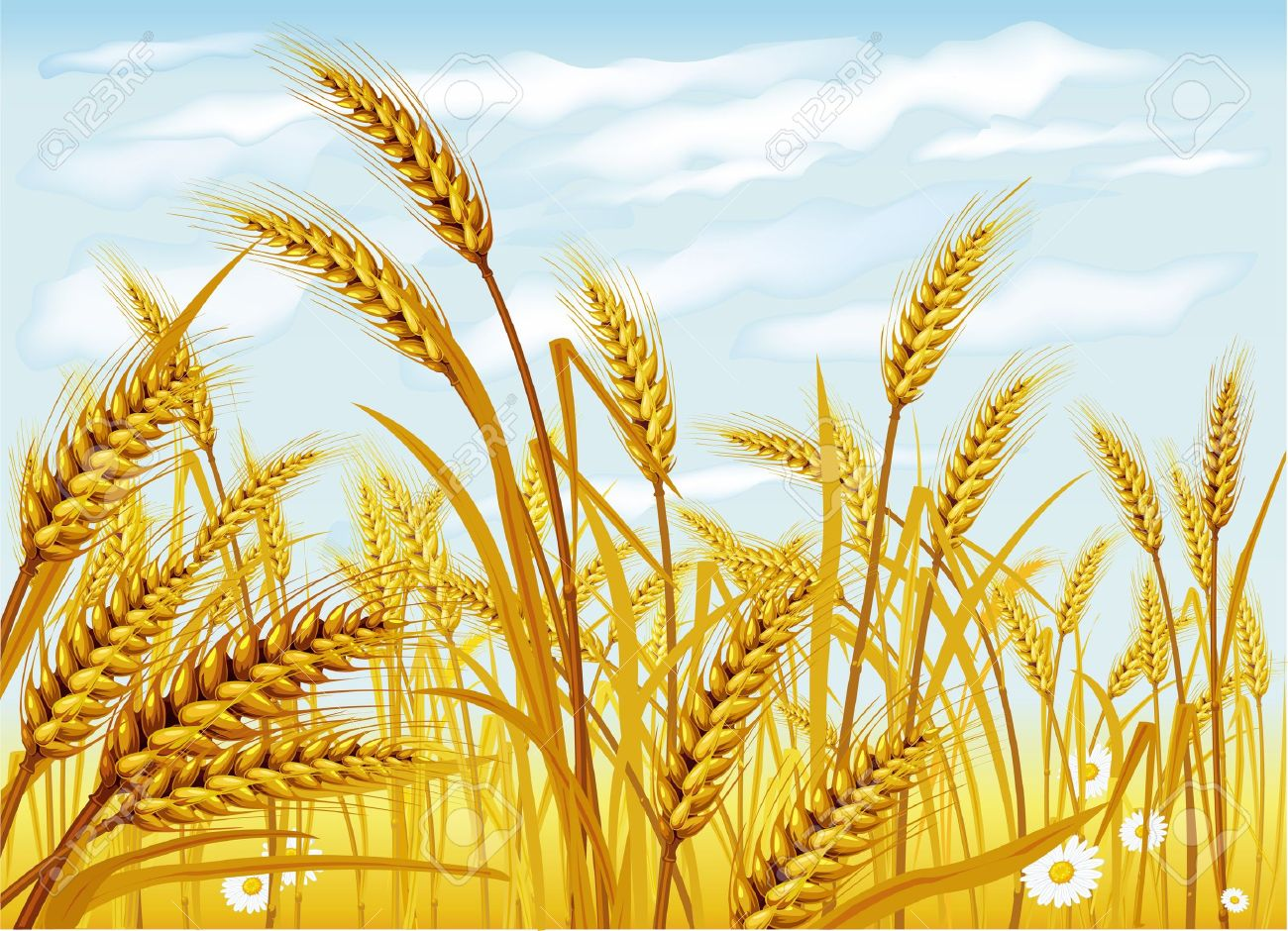 clipart Station . Wheat field clipart
