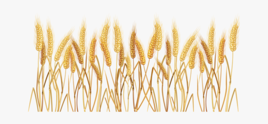svg black and white library Wheat field clipart. Transparent background free cliparts
