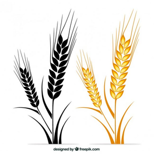 clip art royalty free download Wheat stalk clipart. Free of stalks images