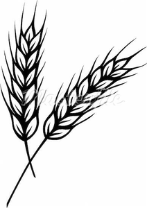 clip free stock Wheat stalk clipart. Free images at clker