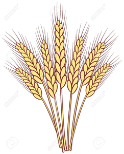 vector transparent stock Stalks of free images. Wheat stalk clipart