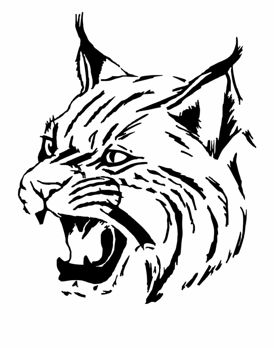 free stock Tiger wildcat cat head. Wildcats drawing