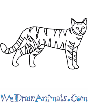 jpg black and white Wildcats drawing. How to draw a