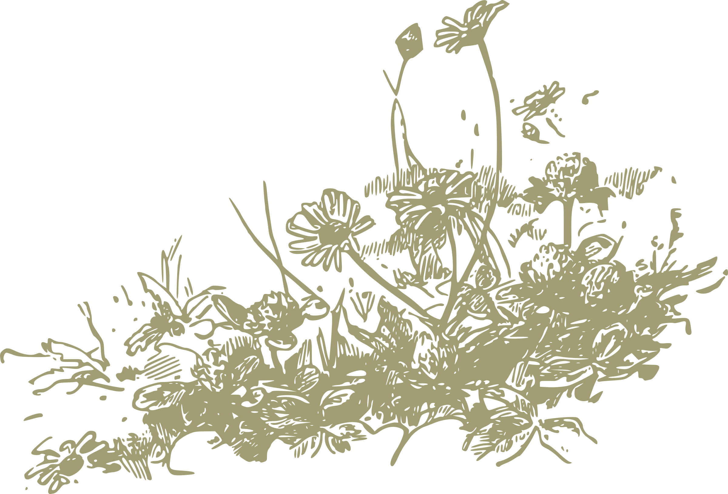 jpg freeuse library Wildflower clipart. Wildflowers big image png
