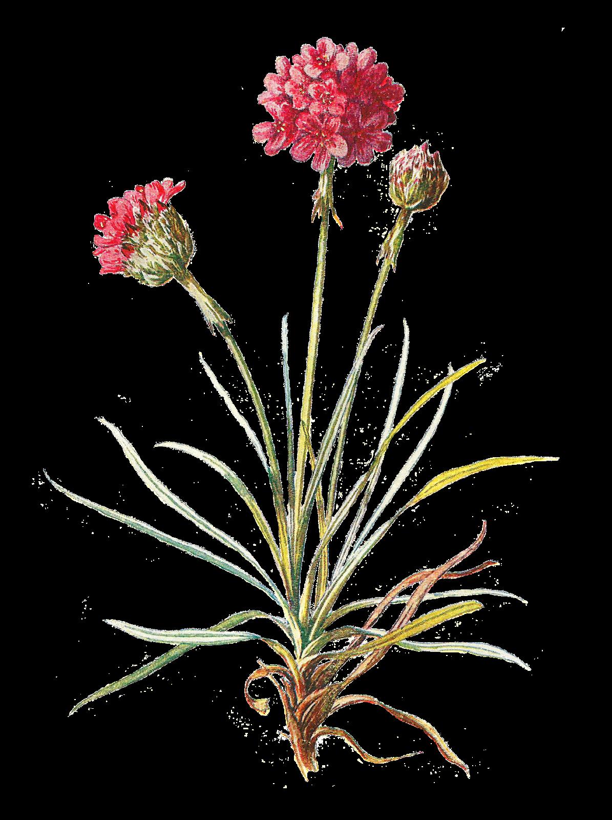 jpg wildflower