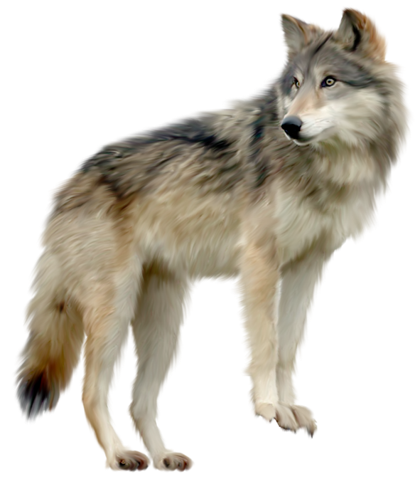 clip art black and white Wolf clipart. Gallery yopriceville high quality